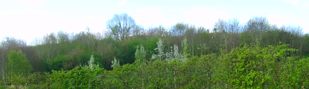Craven Arms Community Garden
