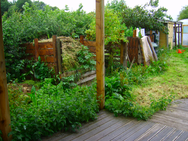 Weeds in the Compost Area