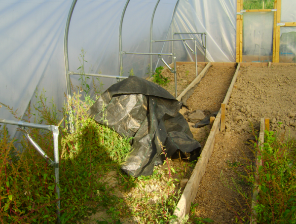 Polytunnel Pathway 16th August 2015