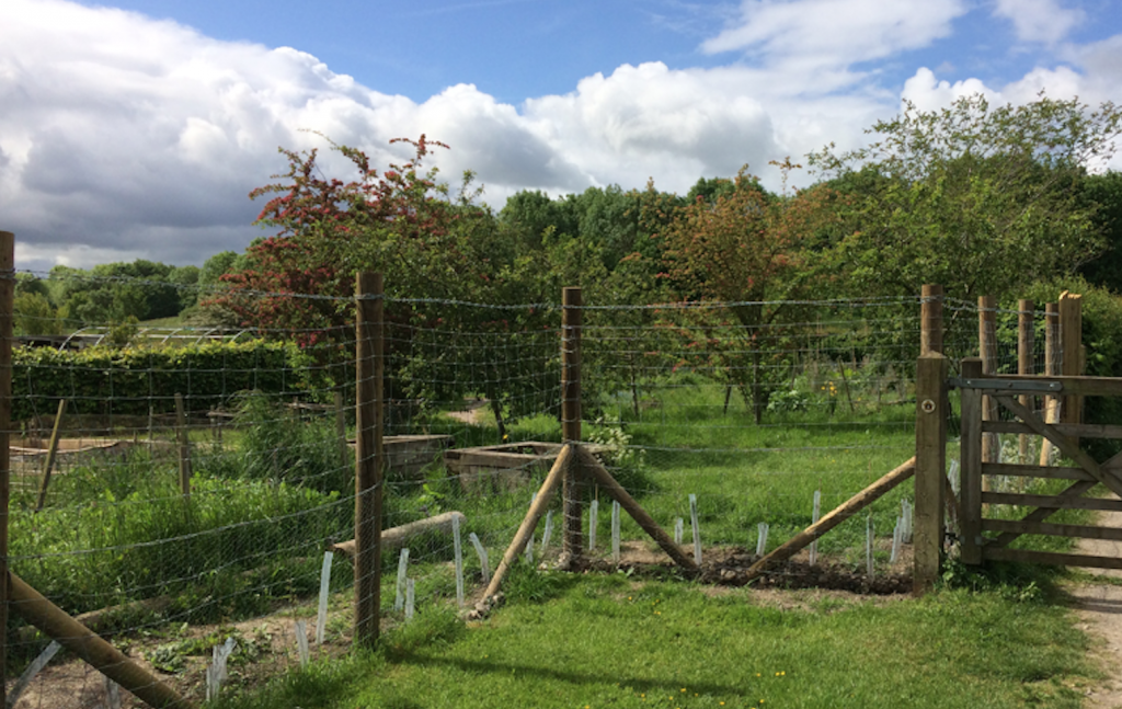 A photograph of the barbed wire on the new fence at the north east corner of the Craven Arms Community GardenArms