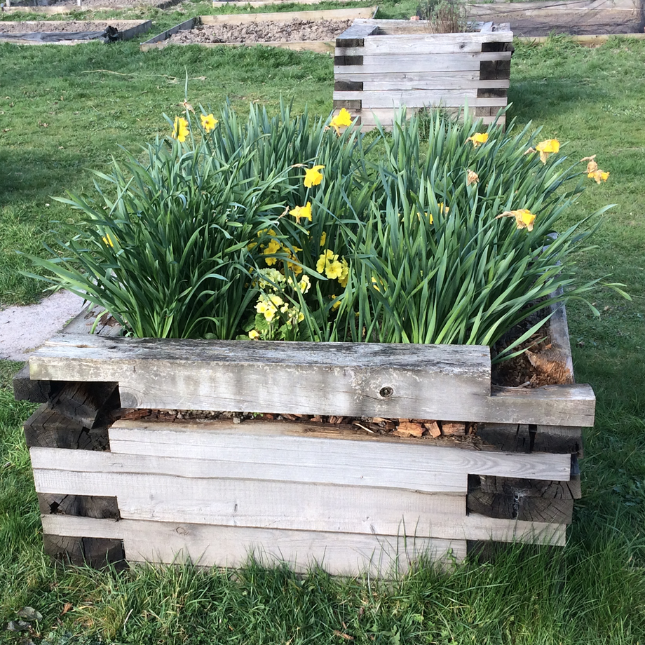 A photograph of an original planter at Craven Arms Community Garden